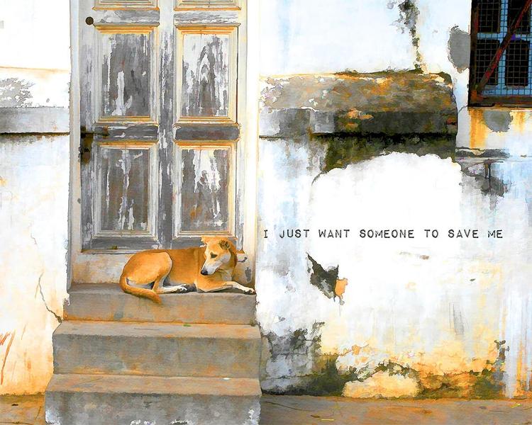 Created dog rescue campaign. pr - kokabella   ello