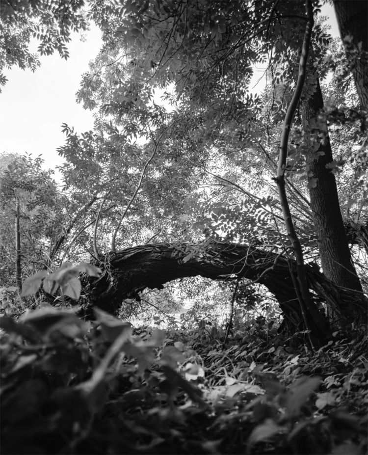 Forrest analogue medium format  - royfocke | ello