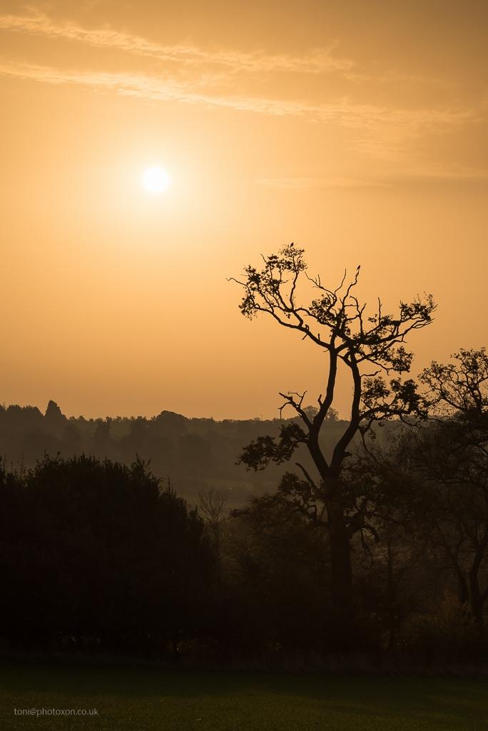 Sahara sun - saharadust, orangesun - toni_ertl | ello