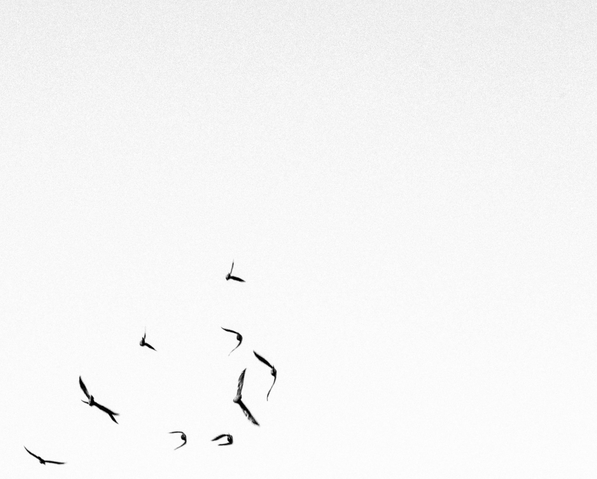 birds barcelona - blackandwhite - deanmcleod | ello