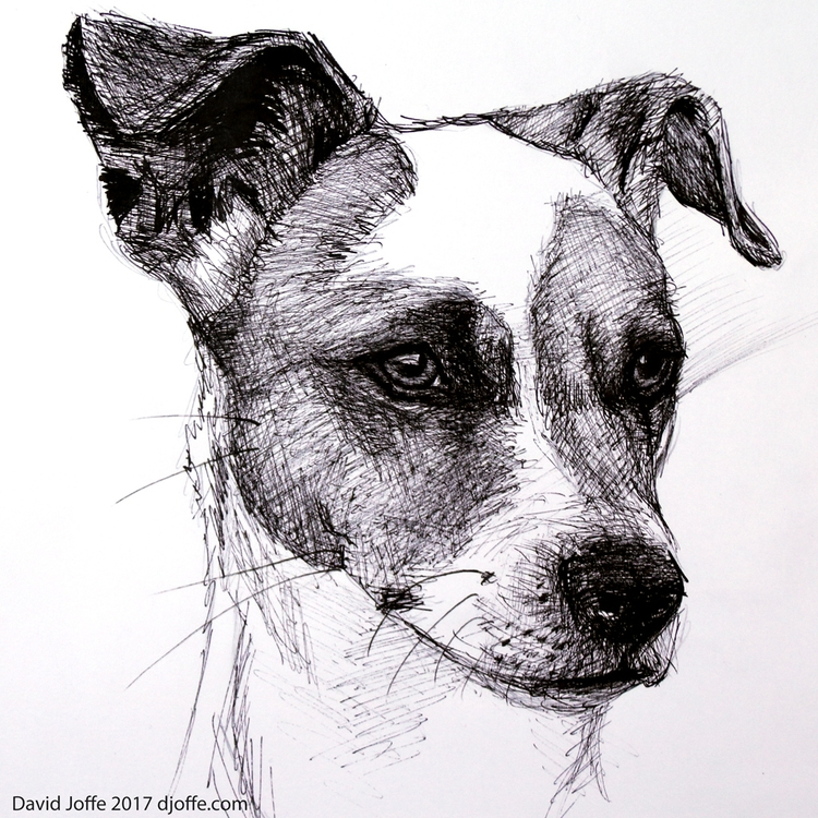 drawing, Dog, Oct 2017 - art, drawings - david_joffe | ello