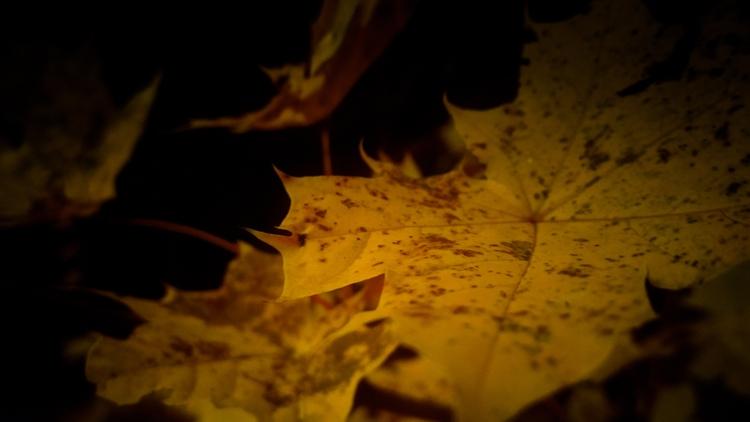 visaginas, leaves, lithuania - beheroght | ello
