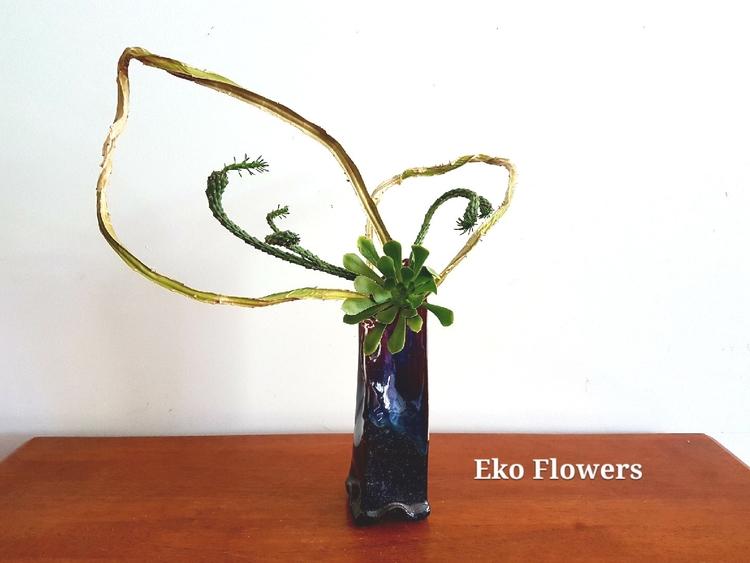 Transformation fun Euphorbia fl - ekoflowers | ello