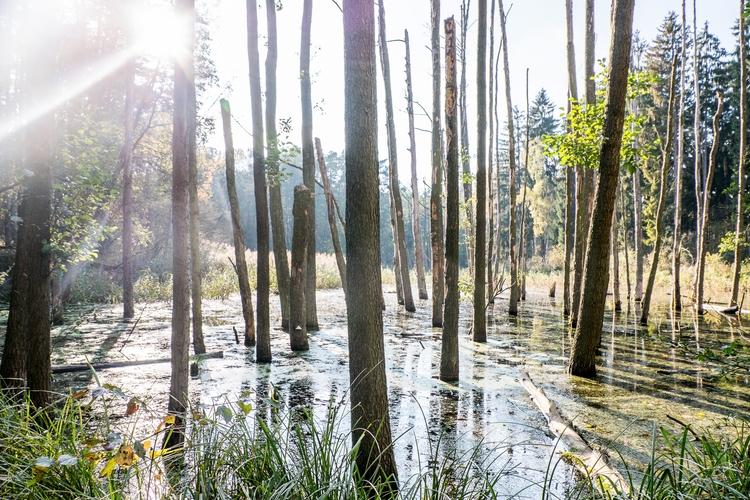 soul, woods, nature, light, magical - subyair | ello