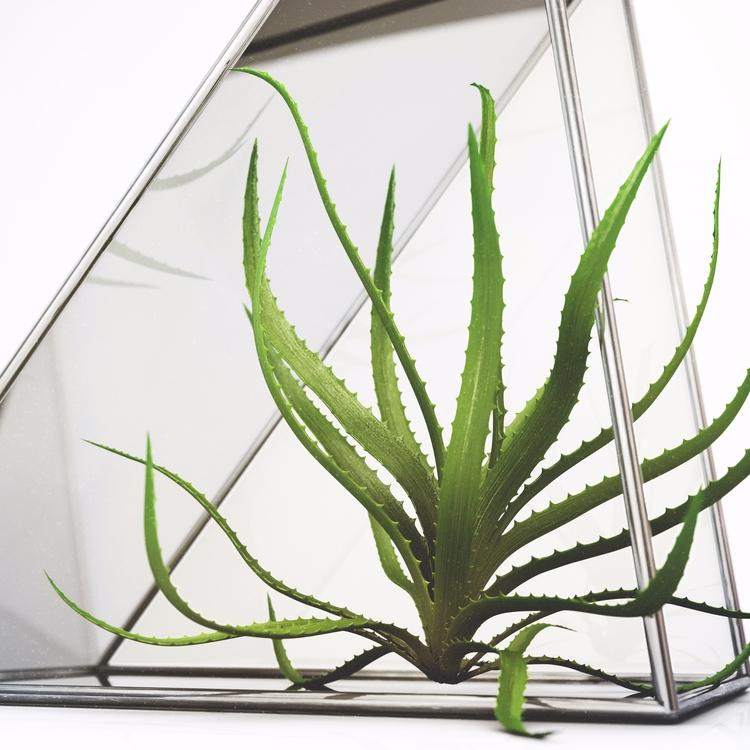 <<air•plant>> ~~ - design - twizzle_stix | ello