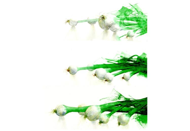 onion, watercolor, green - sapinsobre | ello