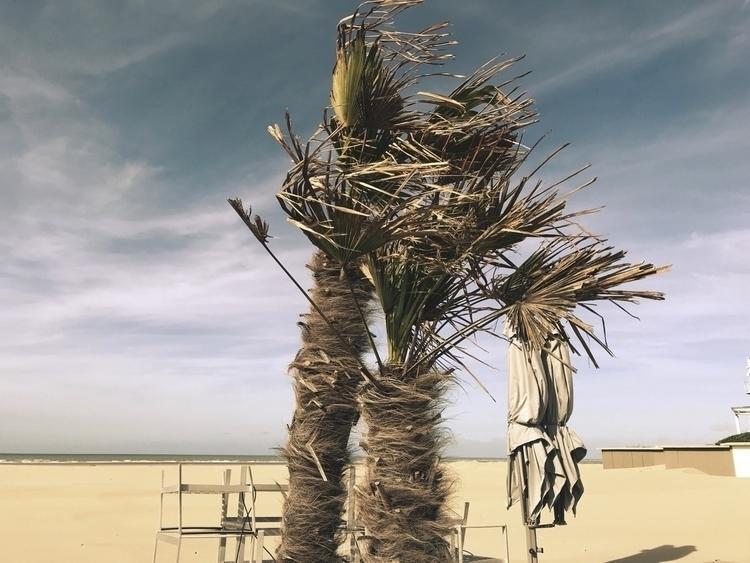 Palms love - beach, france, skies - izavibes | ello