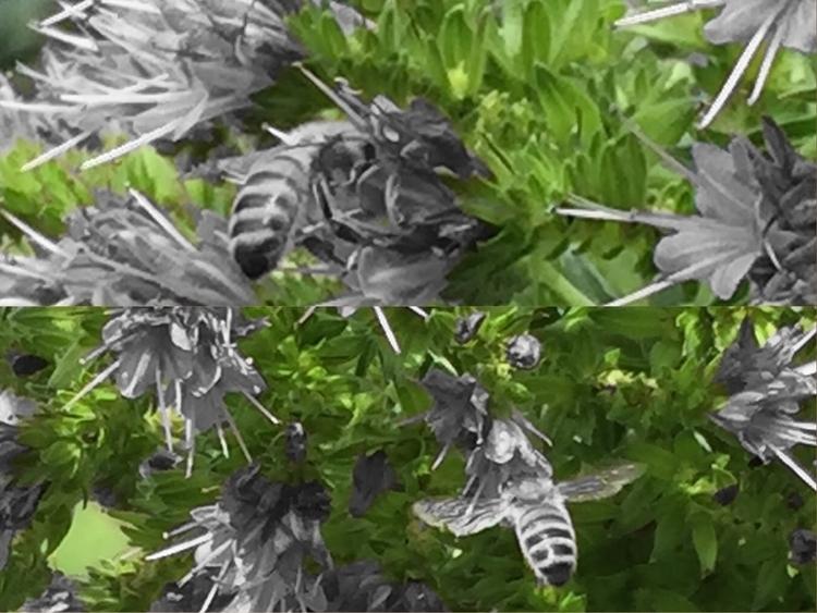 Bee blossom, moth flame - sacrecour   ello