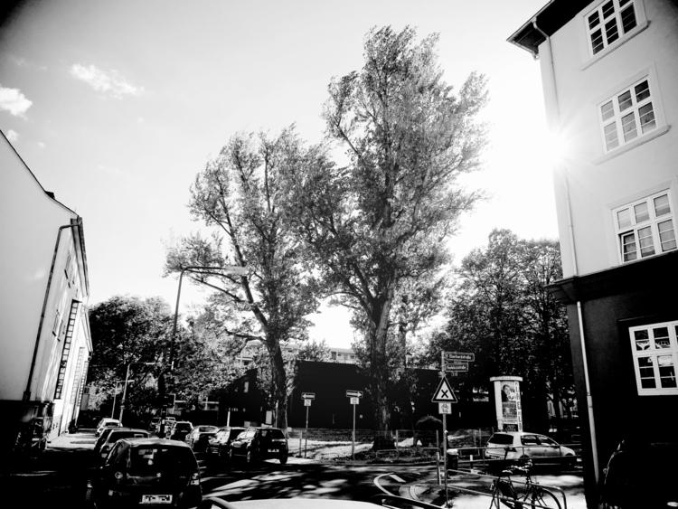 rays sunshine - blackandwhitephotography - borisholtz | ello
