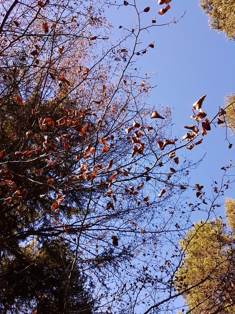 autumn 2017 - photography, nature - santler | ello