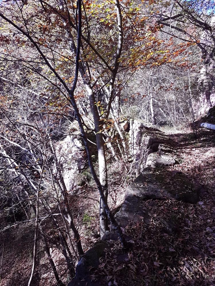 autumn 2017 Fagenbach - bolzano - santler | ello