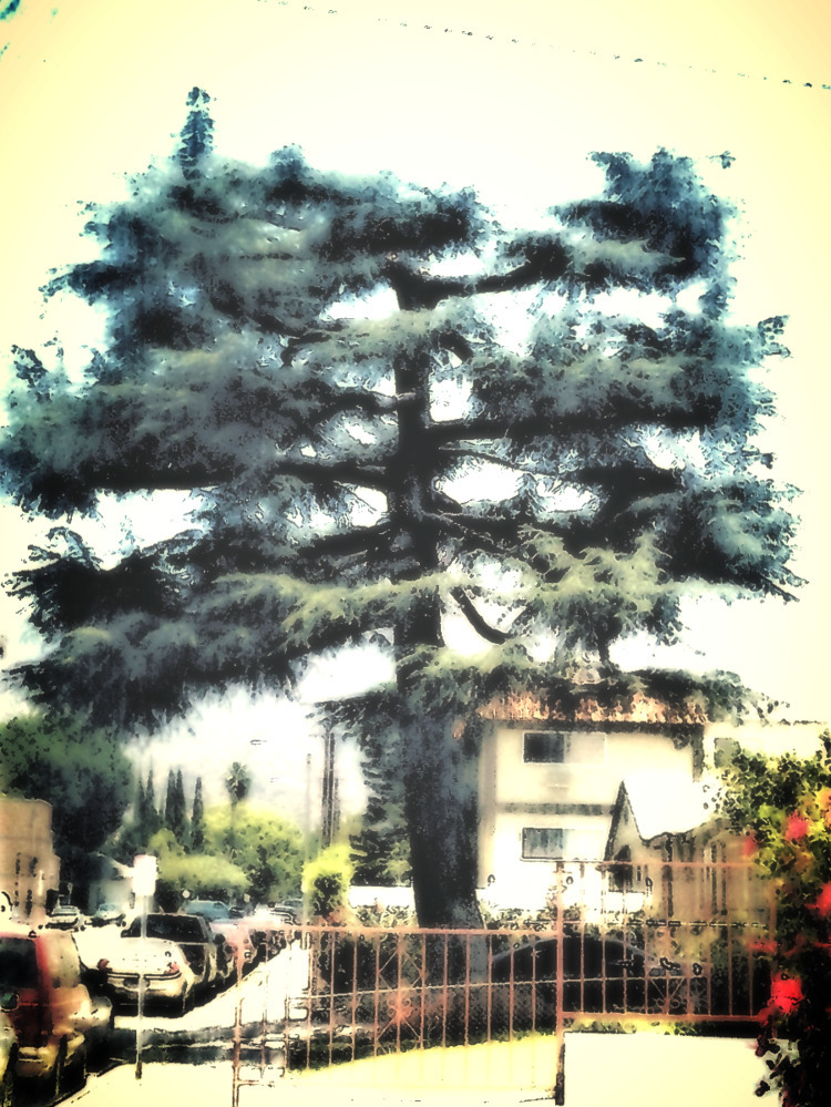 Tree. photomanipulated image - sirhowardlee | ello
