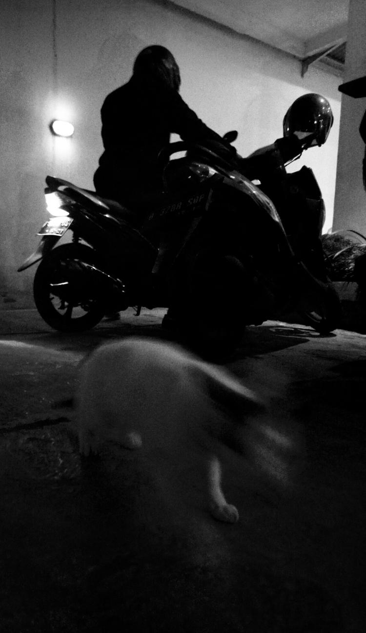 cat head - blackandwhite, photograph - uvha | ello