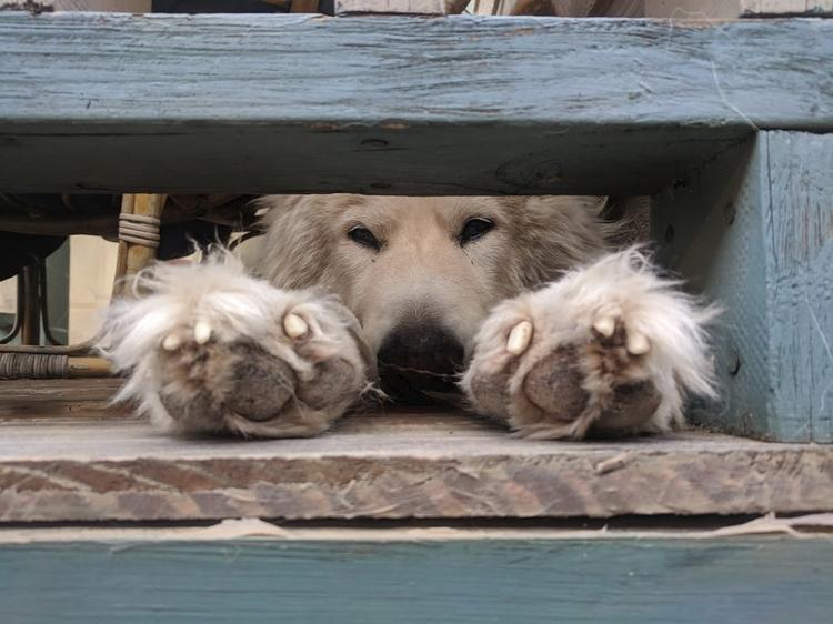 Loki chillin' porch - storandelli | ello