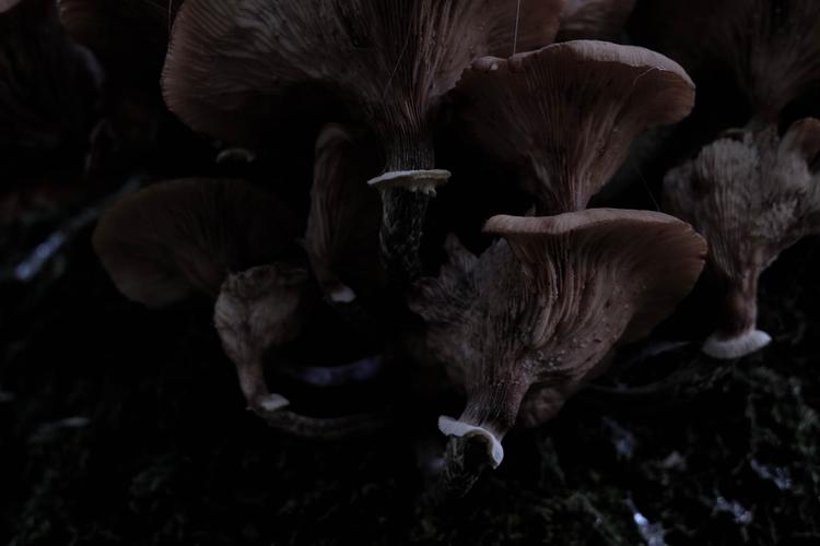 mushroom, mushrooms, spiderweb - blackwyrt | ello