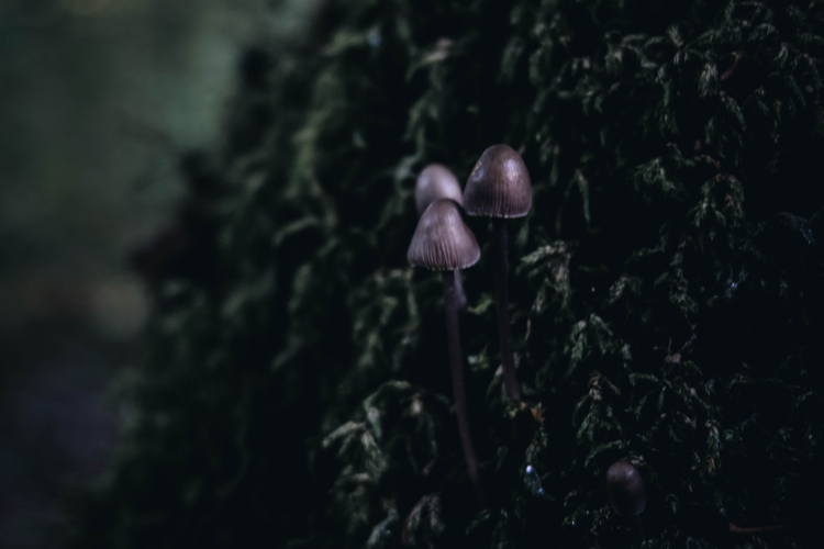 mushroom, funghi, nature, forest - blackwyrt | ello