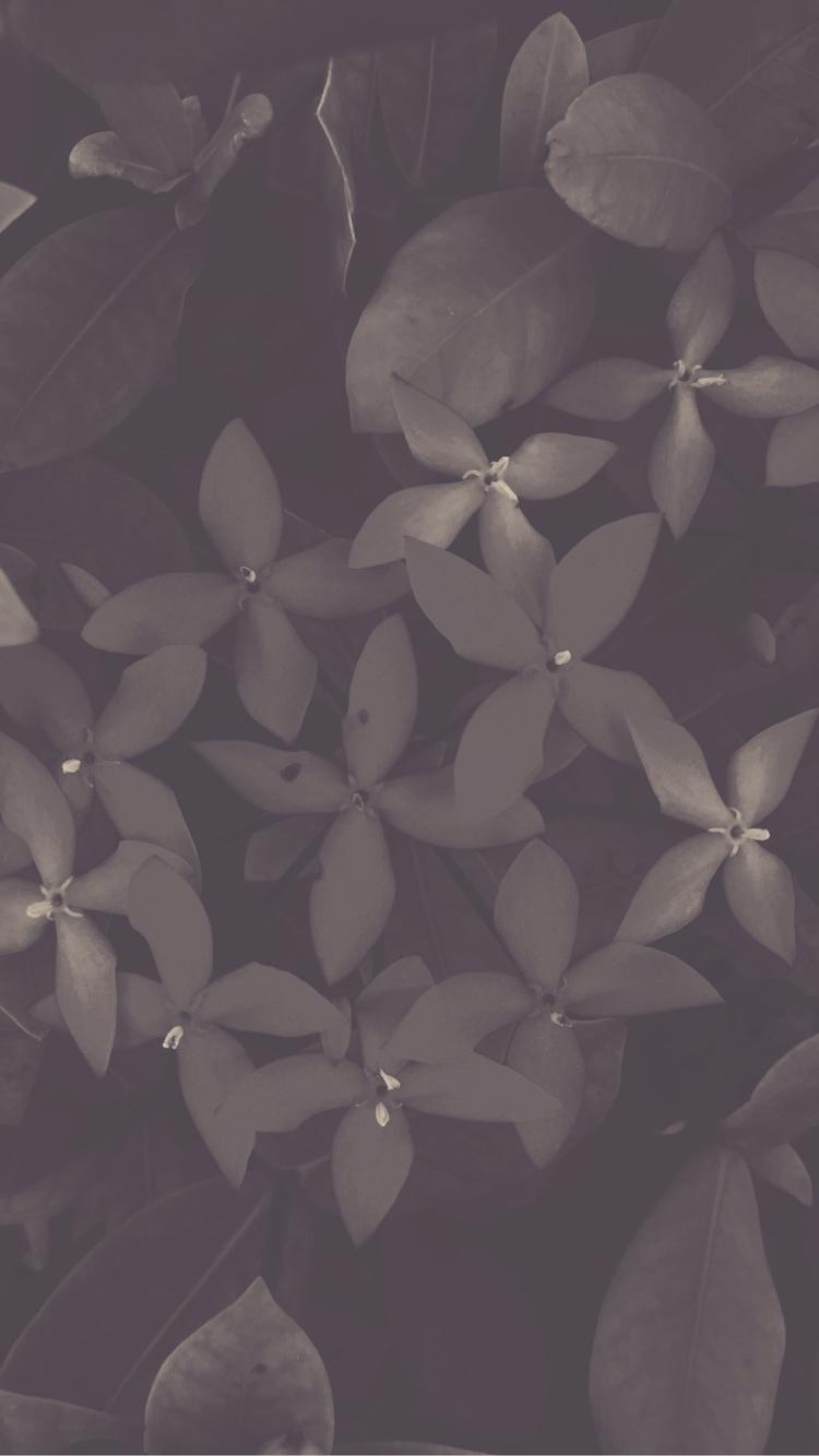 Evening Flowers - mikefl99   ello