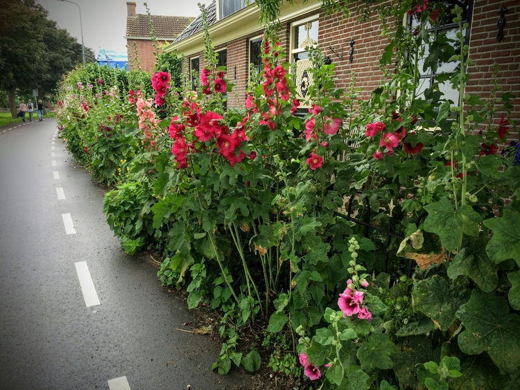 Oosthuizen, Holland - huis-tuin-en-keukenfotograaf | ello