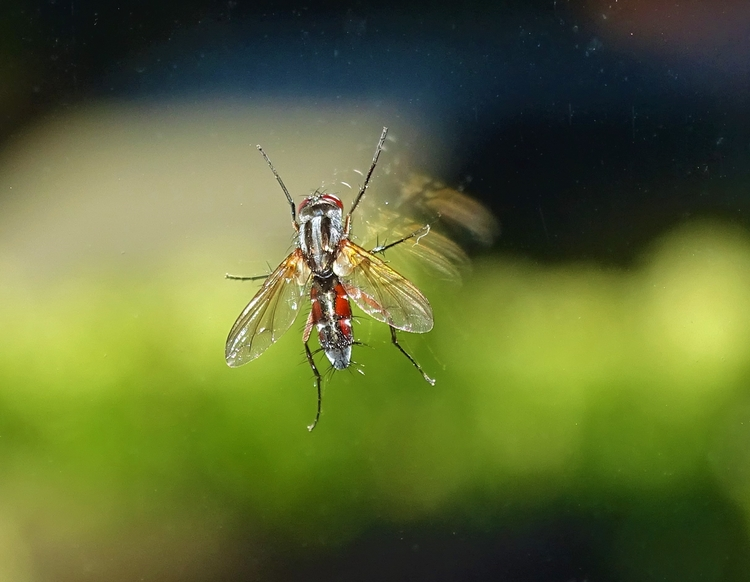 Vlieg op mijn raam - huis-tuin-en-keukenfotograaf | ello