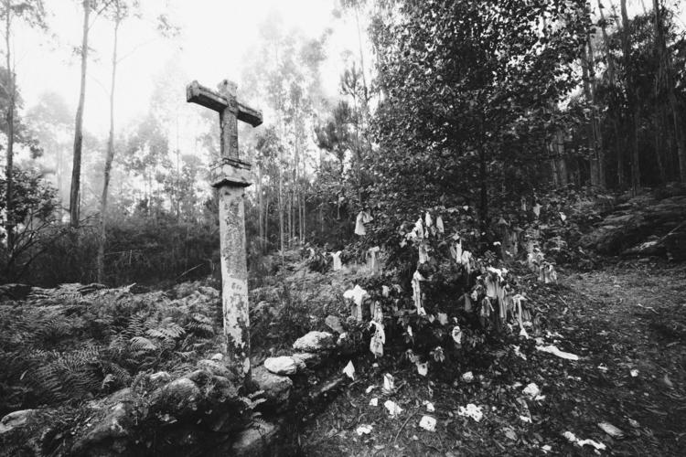 Black forest - photo, photography - robertorey   ello