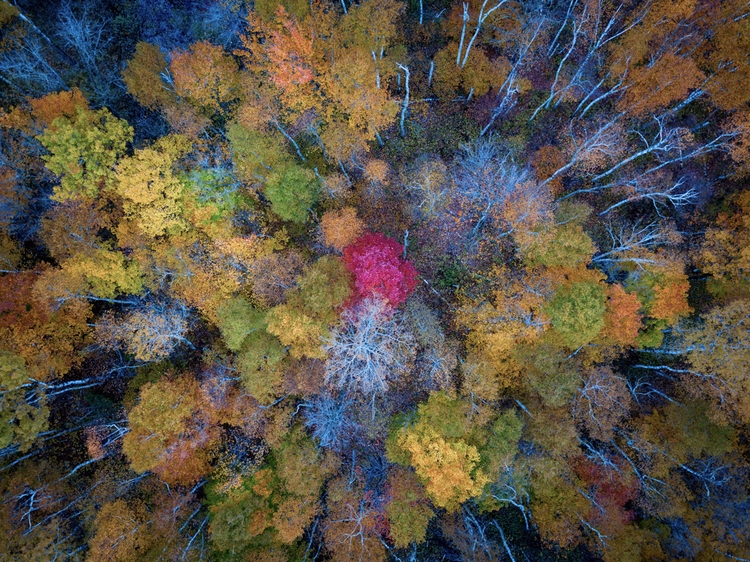 Fall - photography, landscape, dronephotography - toddhphoto | ello