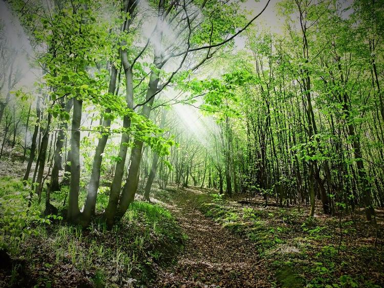 Forest..............#serbia pho - earlyrain | ello