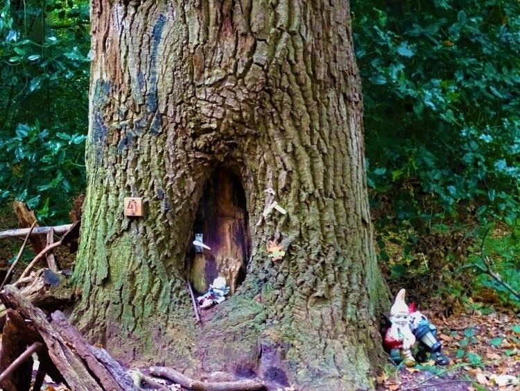 Midden het bos, daar woont - huis-tuin-en-keukenfotograaf   ello
