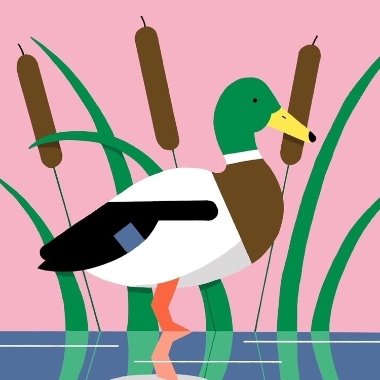 Quack quack - Illustration - andrewwerdna | ello
