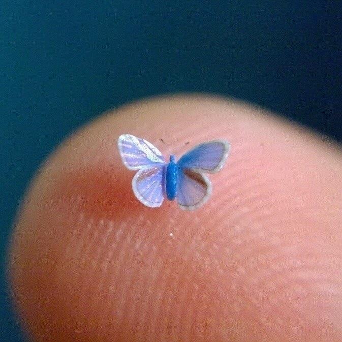 miniature butterflies friend .  - thebutterflybabe | ello