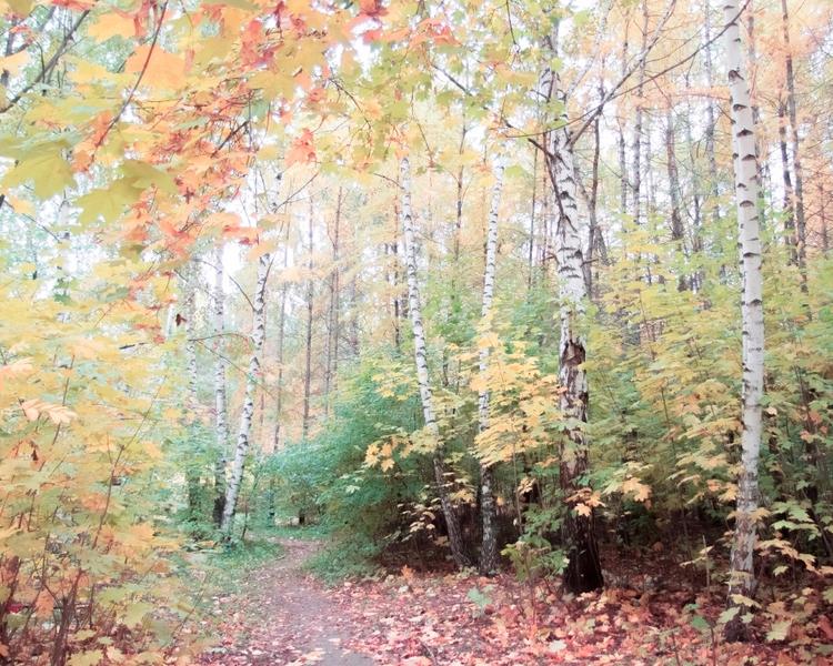 Autumn - landscape, nature, trees - andreigrigorev | ello