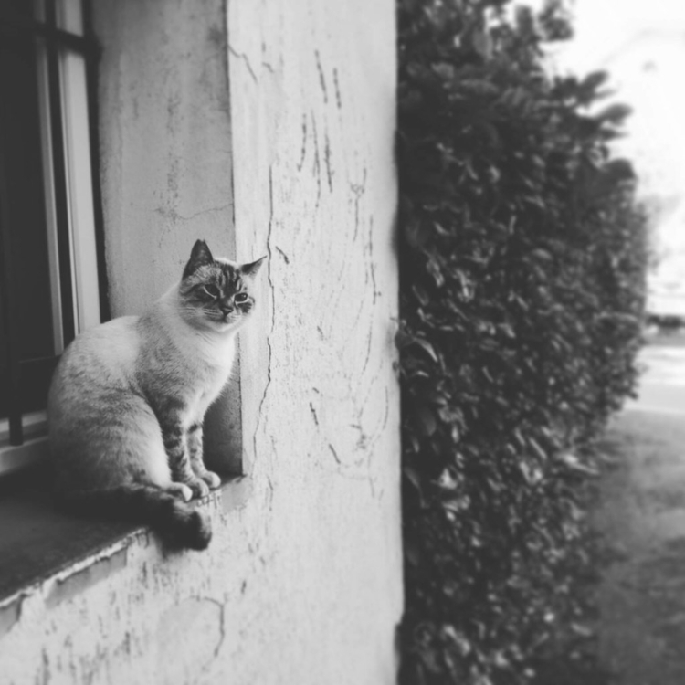 photo, cat, kitty, bw - brureanima | ello