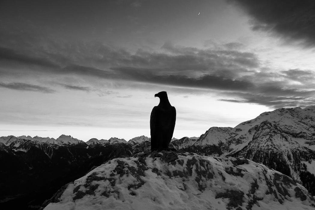 Eagle South Tyrol, ITALY, 2017 - pezzido | ello