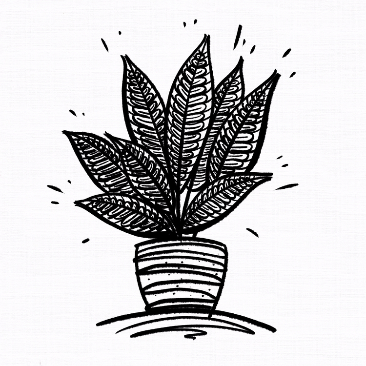 Potted Plants: 'Croton / 'Codia - imponderably | ello