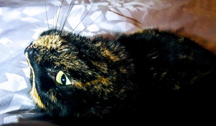cats - sezzyharris | ello