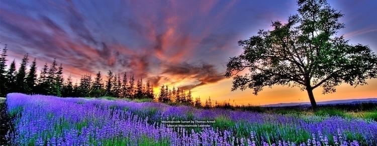 Sunrise. part day symbolizes ho - danvincent   ello