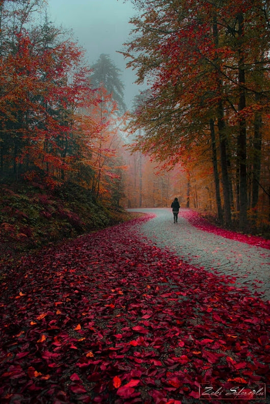 Blazing autumn color road - photography - ourworldstuff | ello