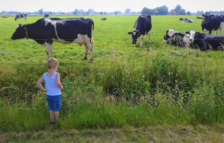 Koeien kijken met de kleine - huis-tuin-en-keukenfotograaf | ello