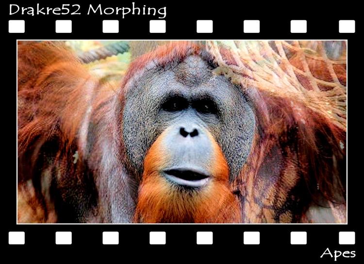 Apes Morphing. Film: Page - drakre52 | ello