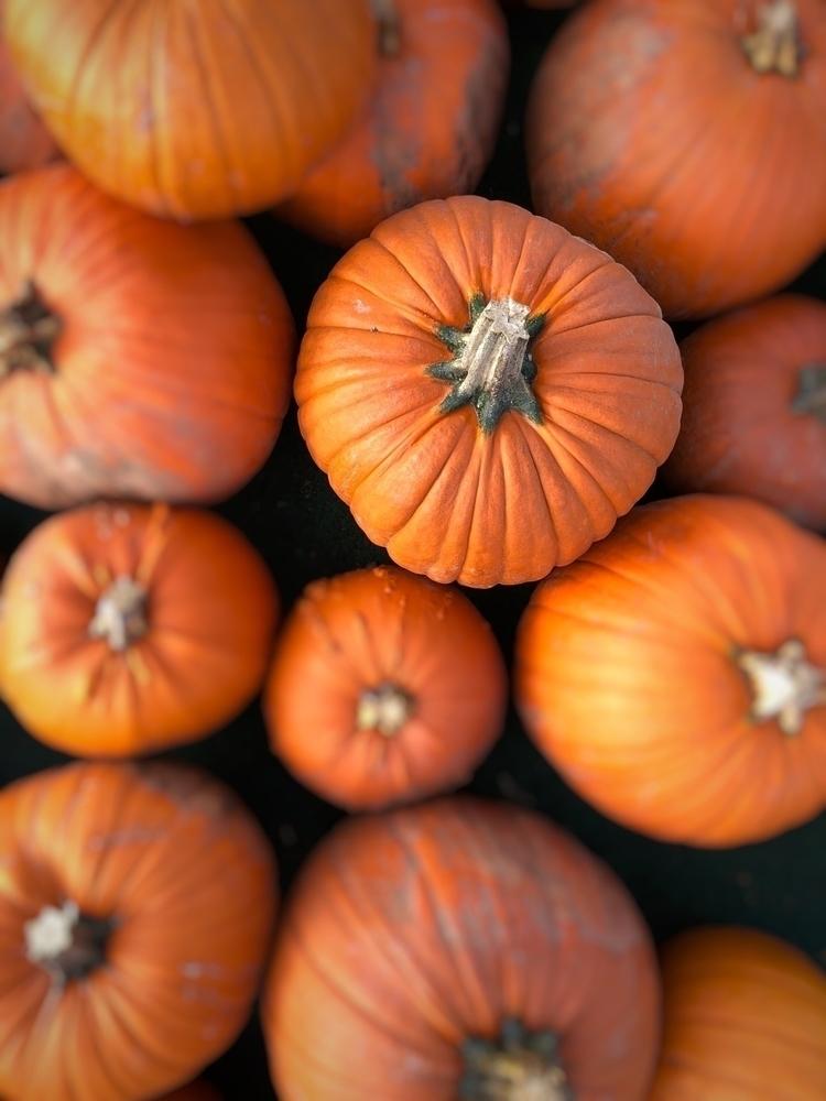 pumpkinpatch, halloween - rowiro | ello