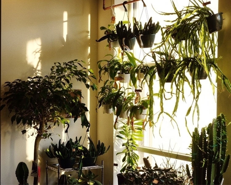 Ello, plants - kateholl | ello
