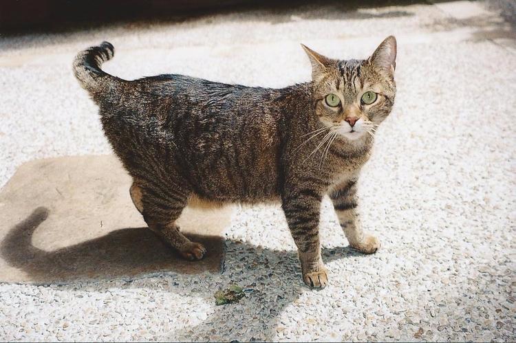 Cat - chloe_triaire | ello