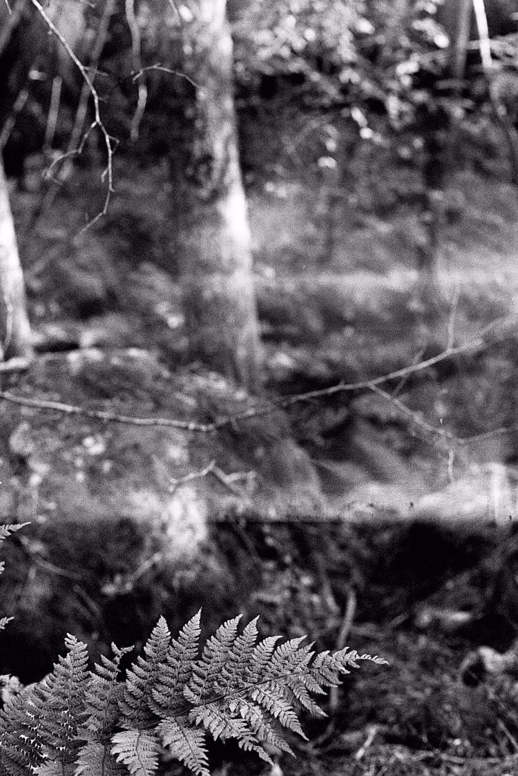 Norway - analog, photography, mamiya - pauline_roquefeuil | ello