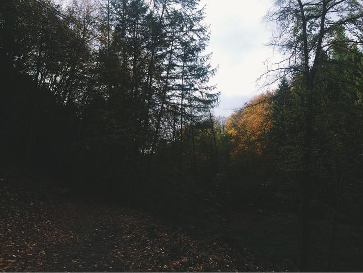 ello, autumn, fall, october, leaves - blackwyrt | ello