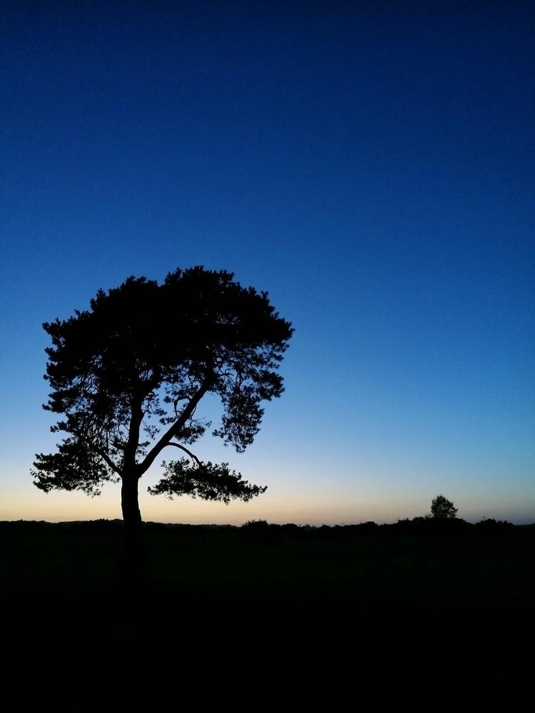 suddenly, winter light - tree, silhouette - estelleclarke | ello