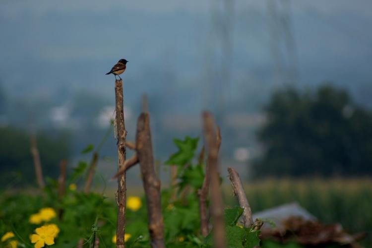 India, Sparrow, Bird - atulbw | ello