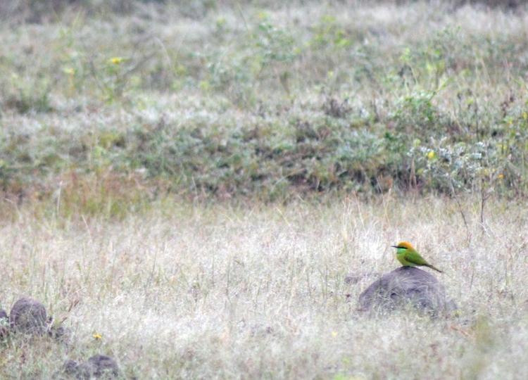 India, Green, Bird - atulbw | ello