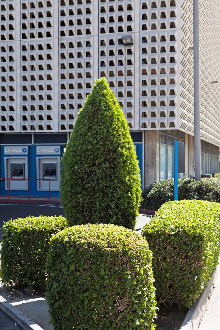 Topiary, Bank, El Monte Douglas - odouglas | ello