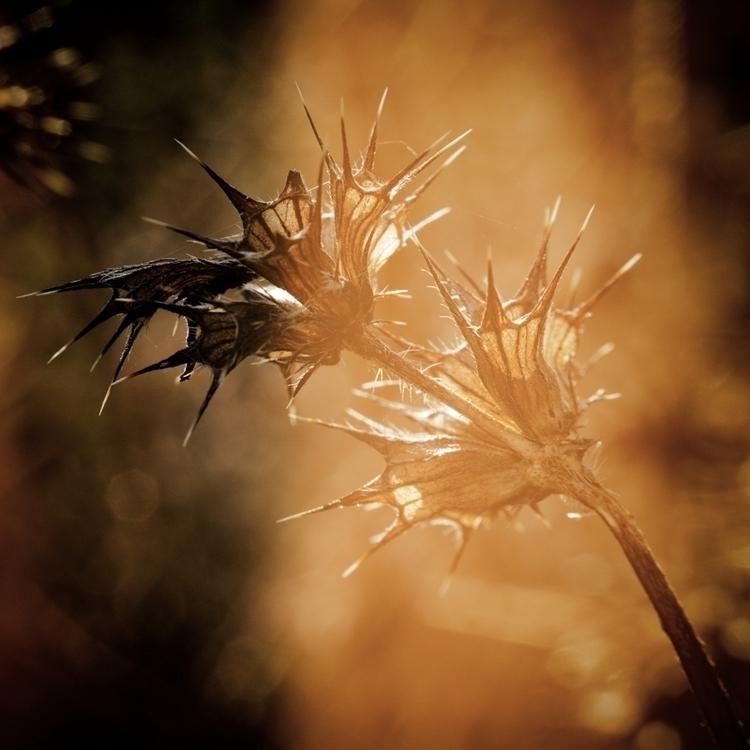Game thorns - photography, plant - marcushammerschmitt | ello