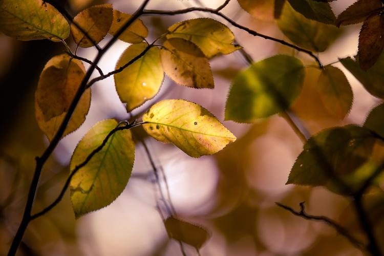 **Colors Fall - nature, photography - mbstuart | ello