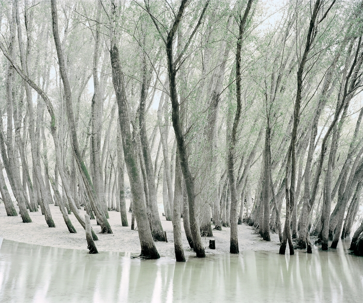 Green Silence Daniel Kovalovszk - phasesmag | ello